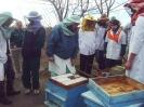 Пчелин 1_1