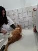 Ветеринарни клиники_2