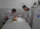 Ветеринарни клиники_5