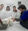Ветеринарни клиники_7