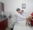 Ветеринарни клиники_8